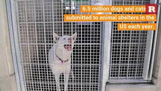 Ways to help animals in shelters | Rare Animals - Video