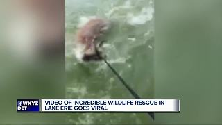 Video of incredible wildlife rescue in Lake Erie goes viral - Video