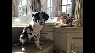 Smart puppy acknowledges that cats rule