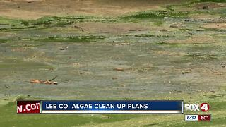 Algae cleanup plans move forward - Video
