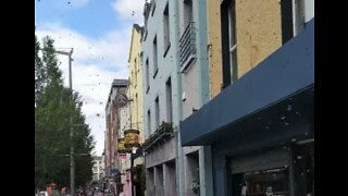 Swarm of Bees Sparks 'Panic' in Ireland's Limerick City