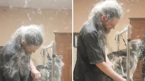 Talk About Hair Of The Dog! Hilarious Video Captures Moment Dog Grooming Causes Dog Fur To Fly Everywhere