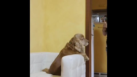 Brave Pup Takes His Medicine Like A Champ
