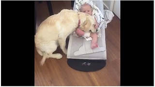 Puppy Gently Snuggles With Baby During Their First Encounter