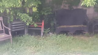 Mother cat and kittens play in backyard