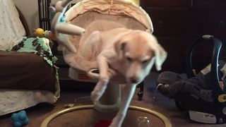 Dog Naps On A Rocking Chair - Video