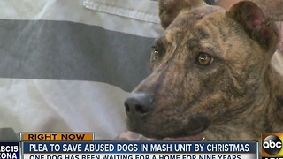 MASH unit making the push to get furry friends adopted - Video
