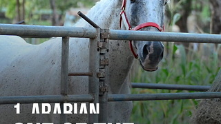 10 Most Popular Horse Breeds in the World