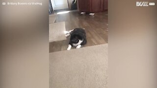 Cat goes crazy with cotton swabs