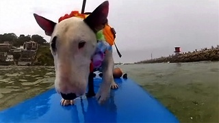 Paddle Boarding Pups - Video