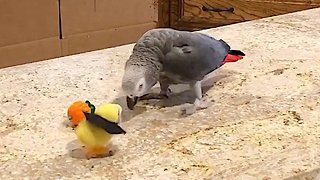 Einstein the Talking Parrot goes to battle against evil!