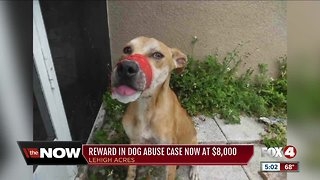 Increased reward on dog found with mouth taped shut in Lehigh Acres