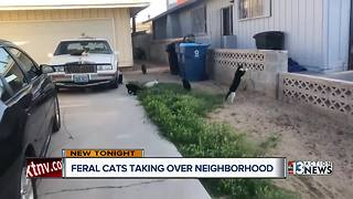 Las Vegas woman says feral cats are taking over their homes - Video