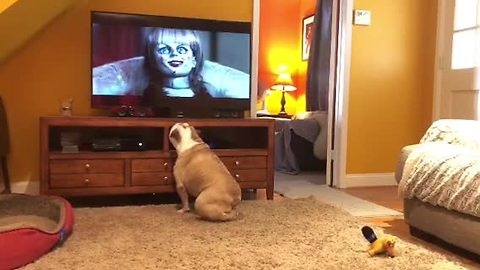 Horror-loving bulldog comes running for scary movie time