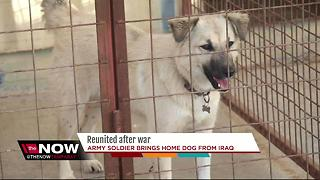 Soldier reunited with dog he adopted in Iraq - Video