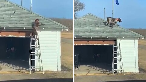 Dog climbs ladder to fetch stick from garage roof