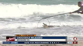 Crocodile on Florida beach moved to 'suitable habitat' - Video