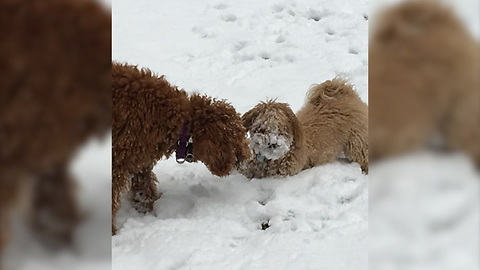 Meet The Best Snow Buddies Ever, Doug And Archie