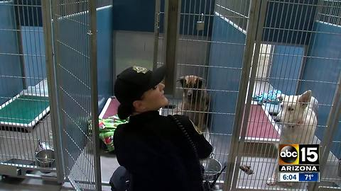 Three shelter dogs euthanized after 'Strep Zoo' case