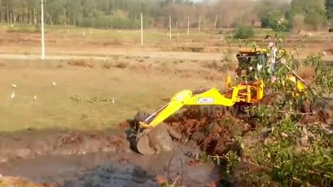 Dramatic moment excavator rescues exhausted baby elephant from swamp