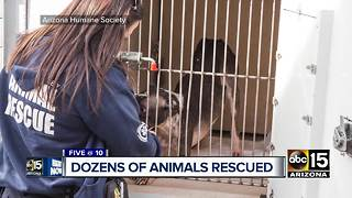 Dozens of animals rescued from PHX boarding facility - Video