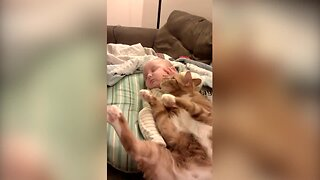 Kitty Snuggles Up with Sleeping Baby
