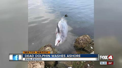 Dolphin and other sea life found dead along Englewood shore