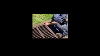 Florida Firefighters Coax Ducklings Out of Storm Drain With Video of Mother Duck