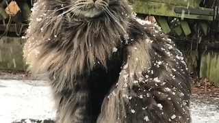 Snow cat - Video