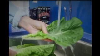 CDC says Florida-grown romaine lettuce is safe to eat