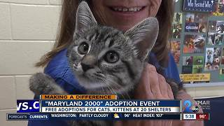 Maryland 2000 adoption event at 20 local shelters for the month of July - Video