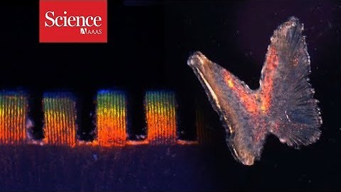 Watch a gel embedded with heart cells change color with every beat