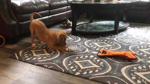 Sweet puppy preciously plays with ice cube