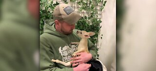Animal Adventure Park in New York hosts white kangaroo