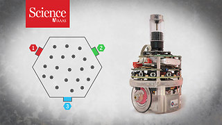 Simple robots form a chain gang to solve complex problems