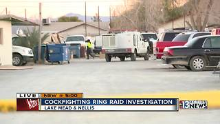 Police, Animal Control raid cockfighting ring - Video