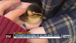 Video shows high school students killing duck - Video