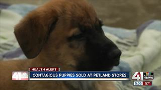 Contagious puppies sold at Petland stores - Video
