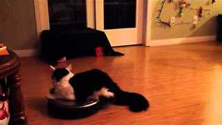 Kitty Rides Robotic Hoover Around Living Room - Video