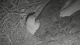 SWFL Eagle Watch - Video