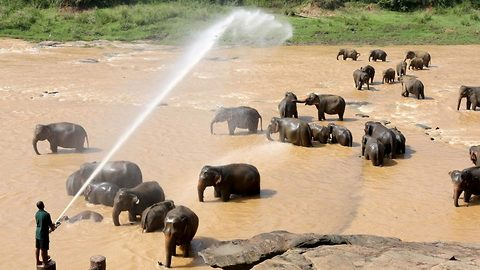 Heartwarming visuals of adorable orphaned elephants being showered with hose in Sri Lanka