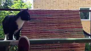 Devious Cat Pushes Tomcat Off Balcony - Video