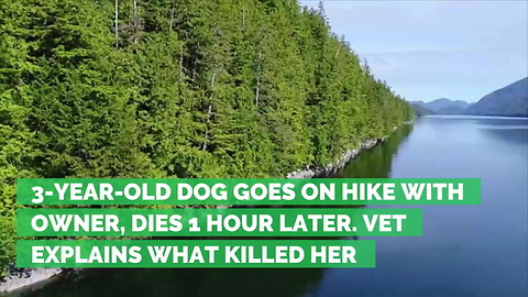 3-Year-Old Dog Goes on Hike with Owner, Dies 1 Hour Later. Vet Explains What Killed Her