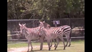 Lion Country Safari to be sold - Video