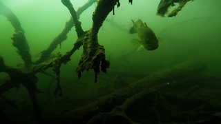 Sunken GoPro captures eerie footage and large, curious bass - Video