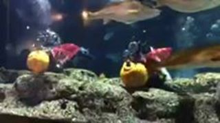 Divers Kick Off Halloween with Underwater Pumpkin Carving Contest - Video