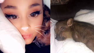 Ariana Grande & Pete Davidson Become Parents To A Baby Pig