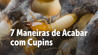 7 Maneiras de Acabar com Cupins - Video