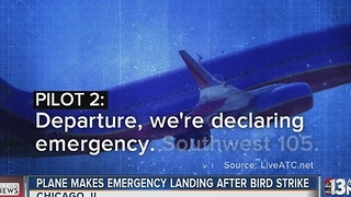 Bird strikes cause two planes to turn back to Illinois - Video