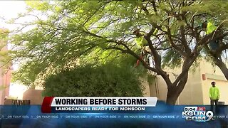 Local landscapers brace for monsoon storms, damage